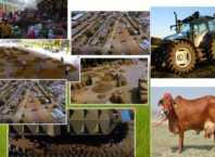 किसान बाज़ार