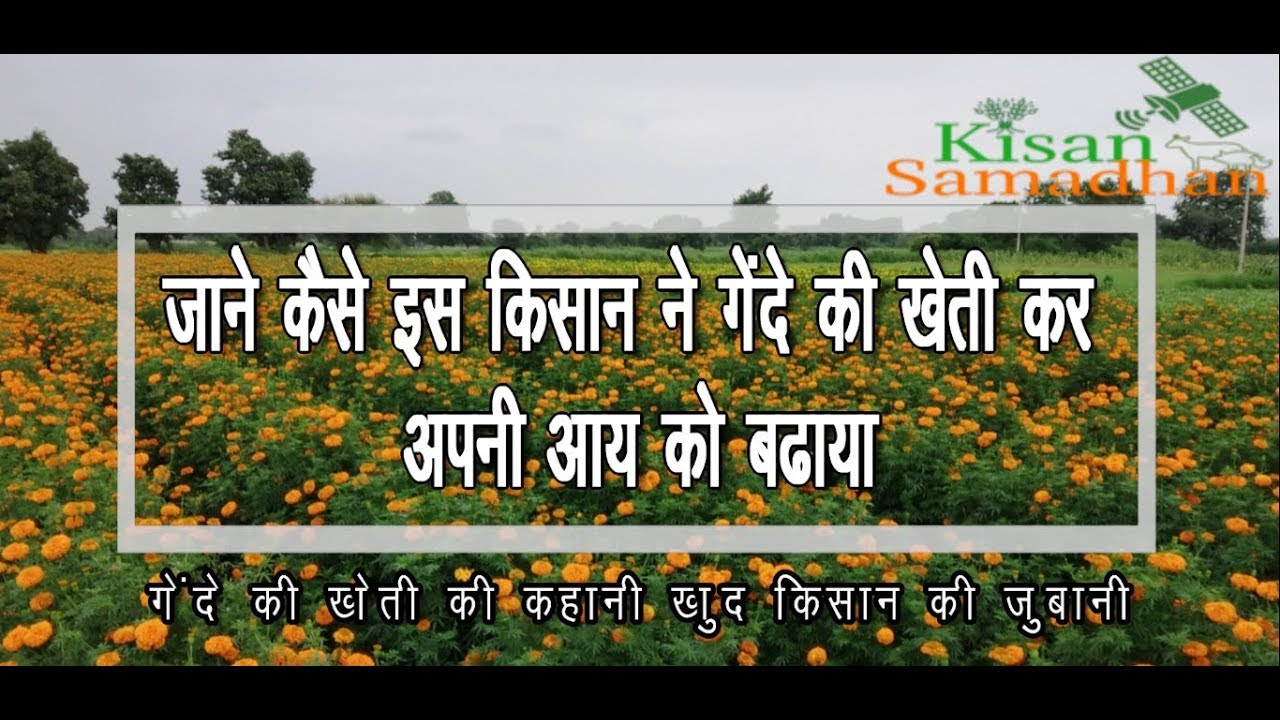 गेंदा फूल की खेती अपनाकर किसान अपनी आय बढ़ाएं