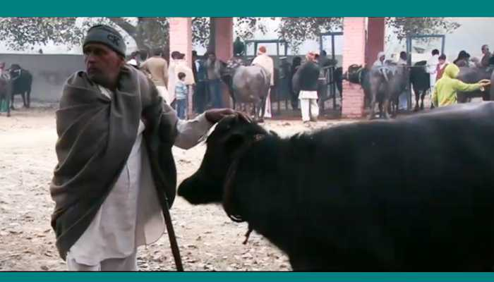 दूध बेचने पर किसानों को मिलेगा बोनस
