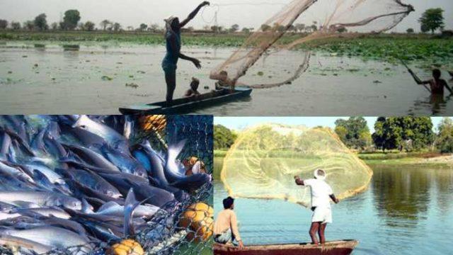Fish Farmer increase there income