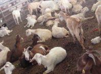 bakri farm anudan bihar