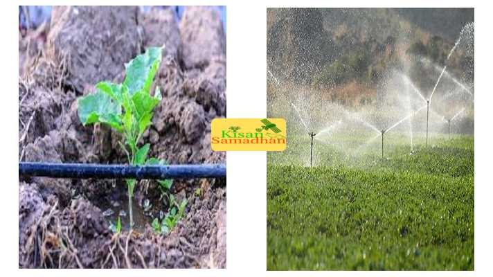 drip & sprinkler on Subsidy