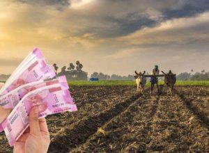 farmer can get new crop loan rajasthan