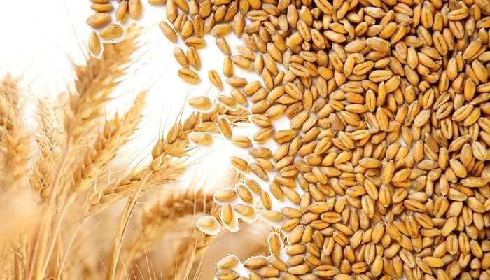 wheat registration raj