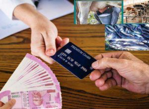 kisan credit card for pashupalan & machlipalan