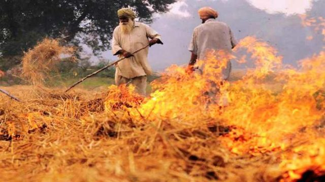 Why should not the farmer burn the wheat harvest in the farm