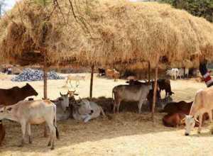 Treatment on eating animal pesticides