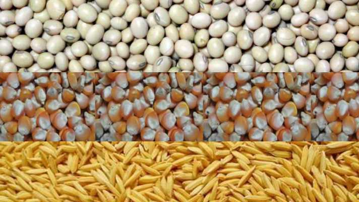 Bad seeds given by seed companies