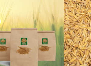 Paddy seed and seed treatment par anudan
