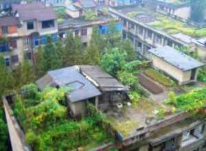 Roof Top Gardning Subsidy Urban