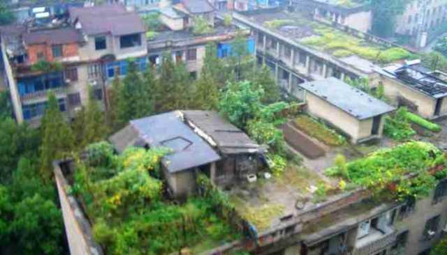 Roof Top Gardning Subsidy Urban