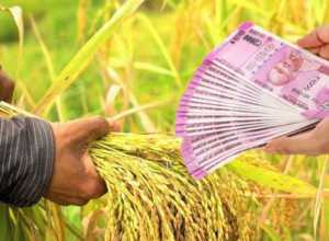 new crop loan