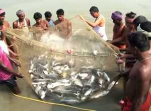 Fish Jeera Production Subsidy
