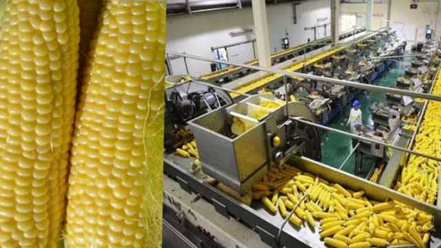 corn processing plant for farmer