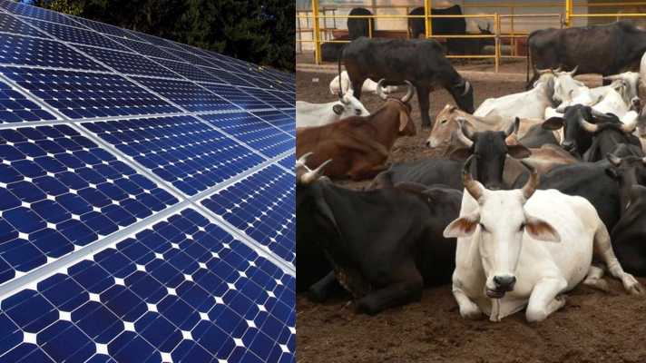 kya hai solar pamp gaushaala ke lie yojana haryana
