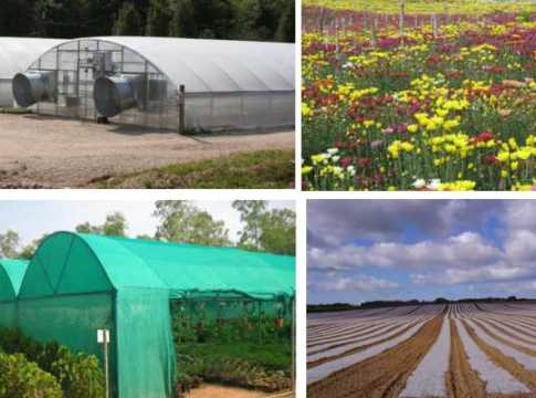 poly house-shed net-plastic mulch subsidy application MP