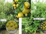 citrus lemon niboo ki kheti hindi me