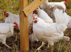 poultry farm subsidy bihar yojna
