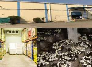 warehouse sheet bhandaar grh, masharoom utpaadan ikaee anudaan hetu aavedan