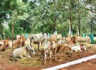 animal sex seman lab bhopal
