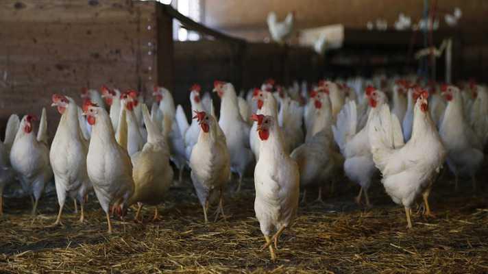 layer farm kholne ke liye anudan yojna aavedan bihar