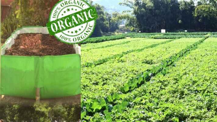organic corridor