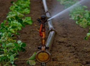 sprinkler set subsidy up avedan