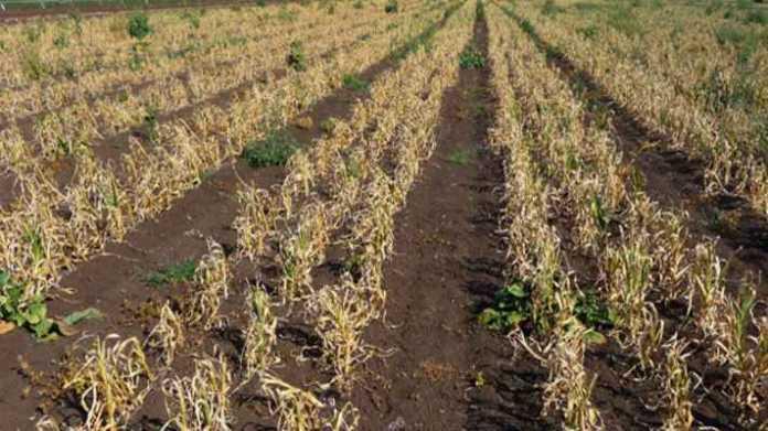 crop damage compensation eligibility