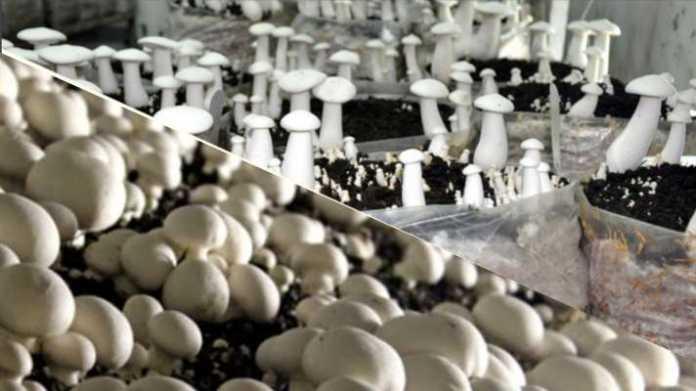 mushroom Training Calander 2020