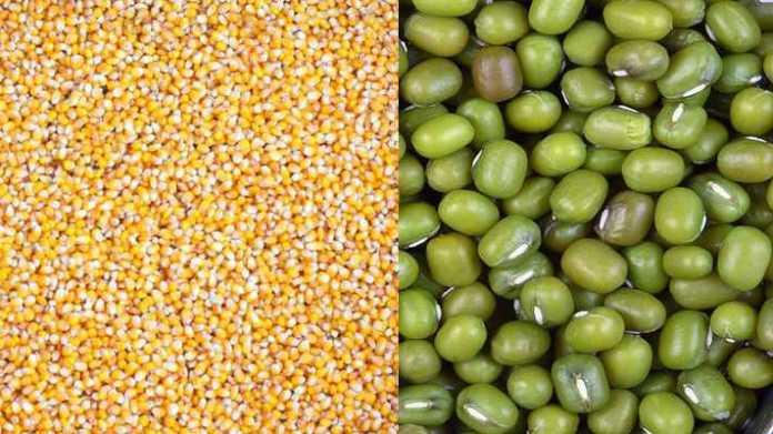 zayaed seed at home anudan