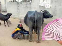dairy kisan credit card abhiyan