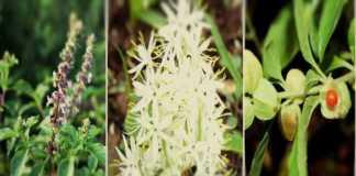 subsidy on herbal crop