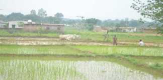 august-september monsoon forecast