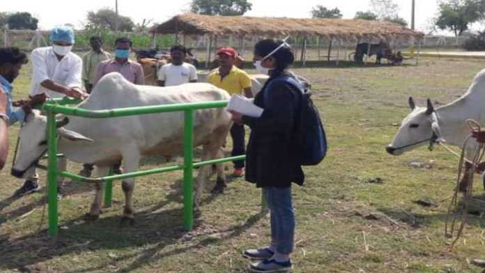 pashu tagging and mfd vaccination