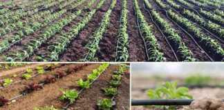 drp irrigation anudan avedan