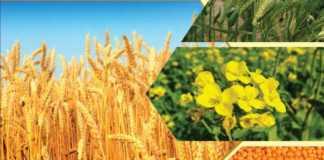 gehun chana sarso rabi crop msp 2021-22