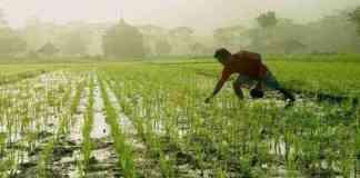 msp kharid new agriculture law