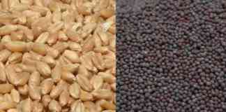 rabi seed variety distribution