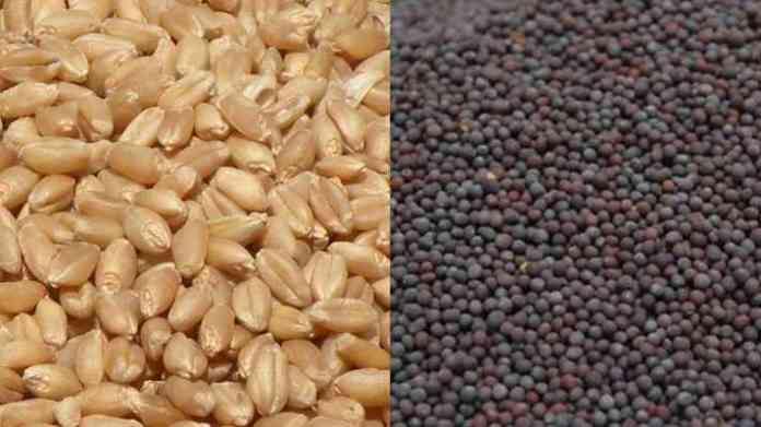 rabi seed variety distribution