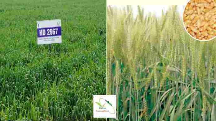 wheat variety hd 2967 anudan hindi