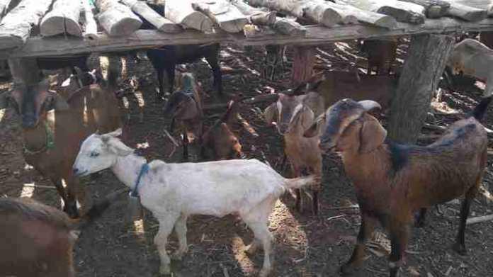 bakri palan subsidy application