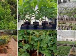 buy plant online from nursery