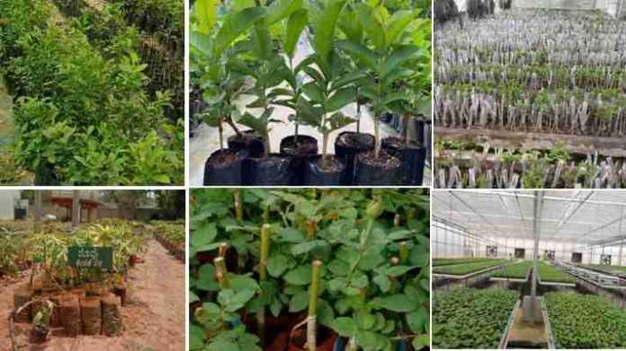 buy plant online from nursery
