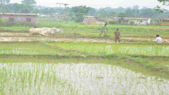 monsoon forecast 2021 IMD