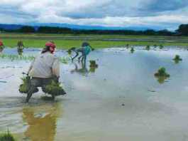 monsoon season forecast 2021 India