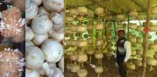 mushroom training 2021