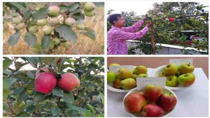 New apple variety HRMN 99