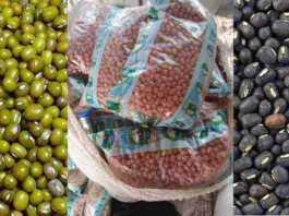 oilseeds and pulse seed mini kits
