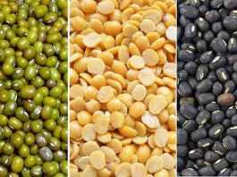 pulses seeds variety