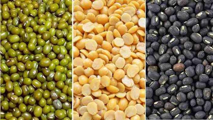 pulses seeds variety